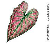 watercolor painting big green... | Shutterstock . vector #1283111593