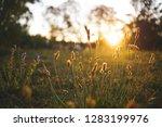 Field Flower On A Green Meadow...