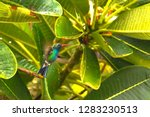 a colibri flying by a tree at... | Shutterstock . vector #1283230513