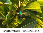 a colibri flying by a tree at... | Shutterstock . vector #1283230516