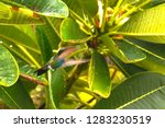 a colibri flying by a tree at... | Shutterstock . vector #1283230519