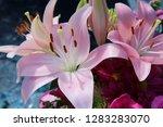 pink flower florist bouquet... | Shutterstock . vector #1283283070