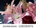 pink flower florist bouquet... | Shutterstock . vector #1283283076