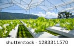 vegetable hydroponic system  ... | Shutterstock . vector #1283311570