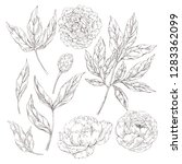 hand drawn vector sketch... | Shutterstock .eps vector #1283362099