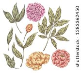hand drawn vector collection of ... | Shutterstock .eps vector #1283362450
