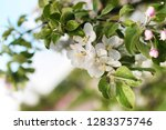 early spring the flowering...   Shutterstock . vector #1283375746
