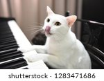 Cat Play Piano