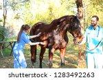veterinarians in uniform...   Shutterstock . vector #1283492263