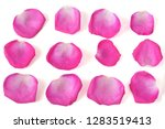 Stock photo rose petals isolated on white background 1283519413