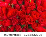 red rose flowers roses nature... | Shutterstock . vector #1283532703