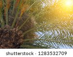 beautiful palm tropical green... | Shutterstock . vector #1283532709