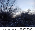 a snowy tree in the winter  at... | Shutterstock . vector #1283557960