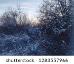 a snowy tree in the winter  at... | Shutterstock . vector #1283557966