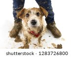 dirty dog and child. funny jack ... | Shutterstock . vector #1283726800