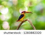 yellow black and red bird ... | Shutterstock . vector #1283882320