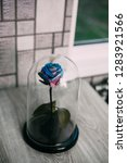 live rose in a blue glass flask ... | Shutterstock . vector #1283921566