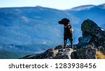 dog in mountains | Shutterstock . vector #1283938456