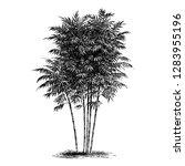 Bamboo Tree Vintage...