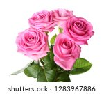 beautiful pink roses on white... | Shutterstock . vector #1283967886