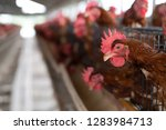 chicken in the factory  hens in ... | Shutterstock . vector #1283984713
