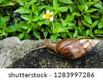 the snail on the footpath in... | Shutterstock . vector #1283997286