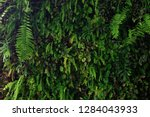 vertical garden nature backdrop ... | Shutterstock . vector #1284043933