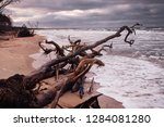 trees on the beach of a... | Shutterstock . vector #1284081280