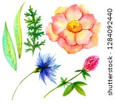 set of watercolor flowers and... | Shutterstock . vector #1284092440