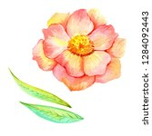 set of watercolor flowers and... | Shutterstock . vector #1284092443