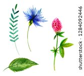 set of watercolor flowers and... | Shutterstock . vector #1284092446