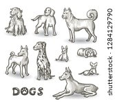 vector set with hand drawn dogs ... | Shutterstock .eps vector #1284129790