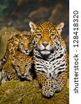 two little jaguar cubs and... | Shutterstock . vector #128418320