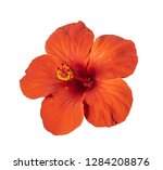 red hibiscus flower isolated on ...   Shutterstock . vector #1284208876