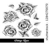 roses hand drawn vector... | Shutterstock .eps vector #1284270070