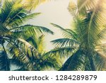 coconut palm tree with blue sky ... | Shutterstock . vector #1284289879