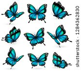 beautiful blue butterflies ... | Shutterstock .eps vector #1284362830
