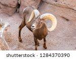 an arizona mountain goat... | Shutterstock . vector #1284370390