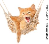 Stock photo cute red haired kitten in hammock on a white background 128440568