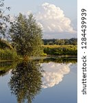 specular reflection of a tree...   Shutterstock . vector #1284439939