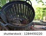 a hen is incubating her eggs in ... | Shutterstock . vector #1284450220