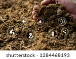 Animal Manure Or Manure In The...