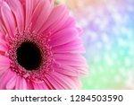 gerbera flower on a multi... | Shutterstock . vector #1284503590
