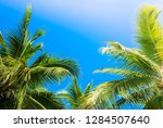 coconut palm tree with blue sky. | Shutterstock . vector #1284507640