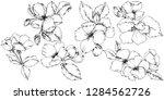 vector apple blossom floral... | Shutterstock .eps vector #1284562726