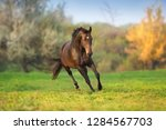 Stock photo horse in motion in autumn landscape 1284567703