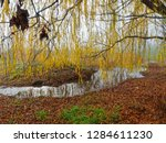 weeping willow tree with spring ... | Shutterstock . vector #1284611230
