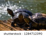 turtles in the sun on the lake ...   Shutterstock . vector #1284712390