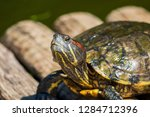 turtles in the sun on the lake ...   Shutterstock . vector #1284712396