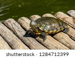 turtles in the sun on the lake ...   Shutterstock . vector #1284712399